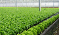 Developing Vietnam's organic agriculture