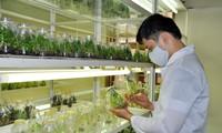 Smart tech increases farmers' income