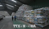 Egypt to import one million tons of rice from Vietnam
