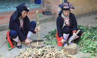 Medicinal herbs of the Dao people