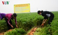 Boosting links – key to increasing Vietnam's farm produce exports