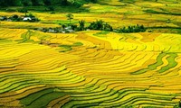 Mu Cang Chai rice terrace fields among the world's most colorful destinations
