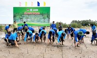 Growing mangrove forests to protect coastline in Ca Mau province