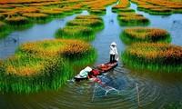 Que savez-vous du Vietnam 2015 : des auditeurs réactifs