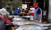 Vietnam berusaha mencapai 5,8 juta ton hasil perikanan pada 2013