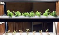 Memperkuat penerapan teknologi tinggi di bidang pertanian
