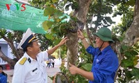 Phan Thanh Sang-Pemuda yang tipikal dalam melakukan pembibitan benih hijau untuk laut dan pulau kampung halaman