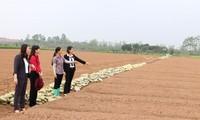 Provinsi Bac Ninh membantu para perempuan melakukan usaha start-up secara efektif