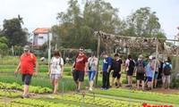 Crece flujo de turistas extranjeros a Vietnam