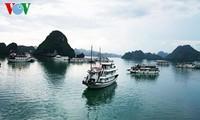 Refuerzan crecimiento verde de la Bahía de Ha Long