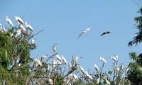 Isla de cigüeñas Chi Lang Nam: encanto atractivo del norte de Vietnam