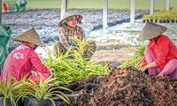 Promueven diálogo a favor del desarrollo sostenible de la agricultura en Vietnam