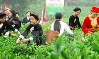 タイグエン省、お茶祭りを開催