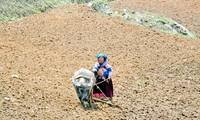 少数民族の人々の農業生産活動