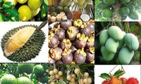 南部の果物(2)