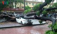 台風ディアンムーによる被害