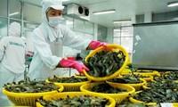 ベトナムの農水産物、大きな輸出先ロシア