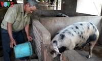畜産で経済発展を遂げた農民