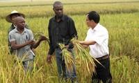 ベトナムと南部アフリカ開発共同体との草の根交流を強化