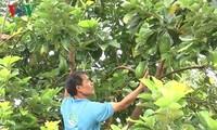 コーヒー畑に果樹栽培を行ったモデル