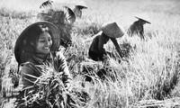 ベトナム国への女性の愛を讃える歌