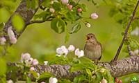 鳥の鳴き声が出てくるベトナム戦争中の歌
