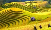 ベトナム西北部山岳地帯の演奏曲