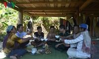 チュット族の栽培開始祭り