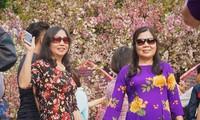「ハノイ・日本桜祭り2019」におけるアオザイと日本の伝統衣装