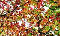 ベトナムのロマンチックな秋の曲