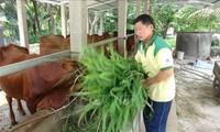 ベンチエ省の模範となる農民フィン・バン・デットさん