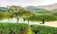 ベトナム中部の民謡『ビーザム』(Vi Dam)