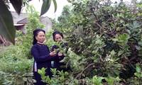 The San Chi's livelihood