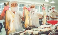 Vietnam Pangasius Association unites for development