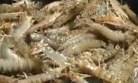 Seafood exports contribute to national economic growth