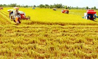 Efforts for rice production and consumption in Mekong Delta highlighted