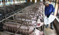 TPP offers driving force to restructure Vietnam's agriculture