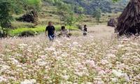 2016 Buckwheat Flower Festival opens