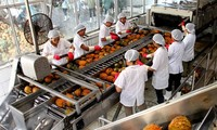 Production by value chains increases Vietnam's vegetable and fruit exports
