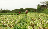 Vietnam's sustainable poverty reduction is to implement MDGs
