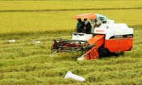 Vietnam applies high-tech in agriculture production