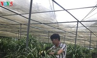 Cymbidium orchids help Ta Phin people escape poverty