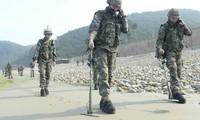 Péninsule coréenne: début d'une opération de déminage dans les zones frontalières