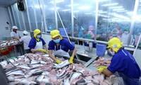 Vietnam : un marché potentiel du pangasius