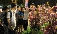 ホーチミン市で「桜祭り2016」