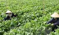 農水産物、食品に関する日越の連携