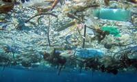 世界環境デーに応える集会