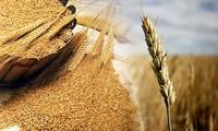「世界食糧デー」を記念する