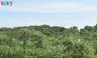 2万羽の鷺が集まる公園を訪ねて