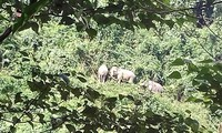 ベトナム、野生動物の保護に努力